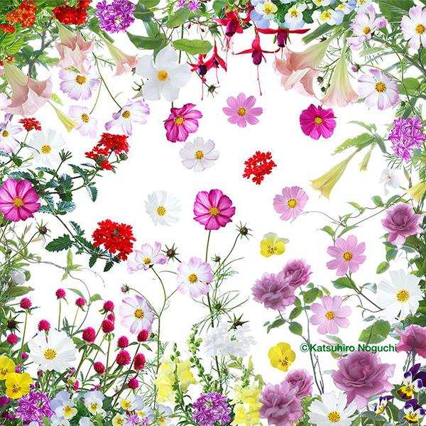 飯館村仮設住宅の皆さんのお花