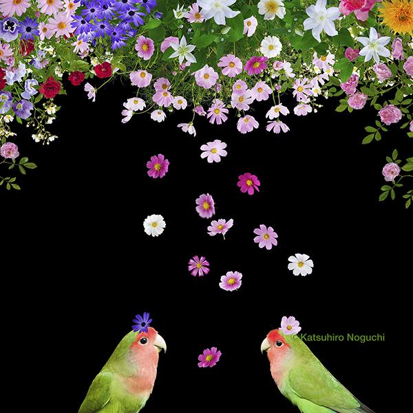 花とインコ