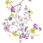 マーガレット ペラルゴニウム ビオラ サンキライ 黄梅