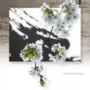 春の嵐と桜